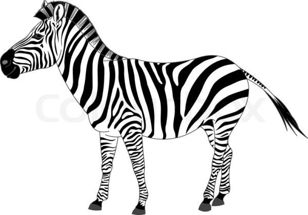 Zebra zeichnungen clip Vektorgrafik Colourbox