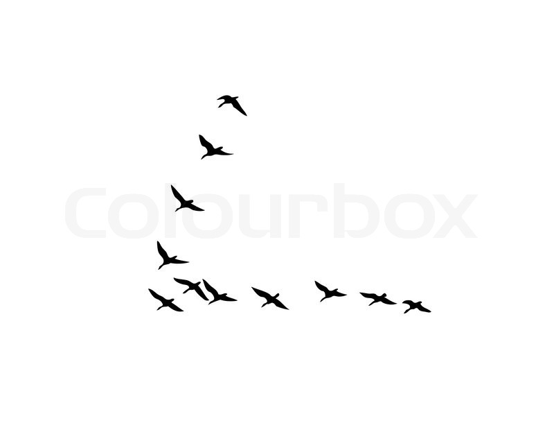 Vector Silhouette Flock Geese On White Background Stock