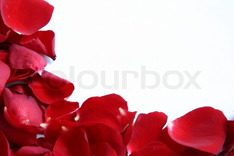Frame Made Of Red Rose Petals Isolated On White Background