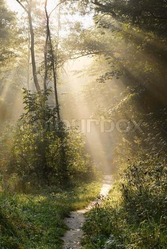 Path In The Woods In Autumn Misty Morning Stock Photo