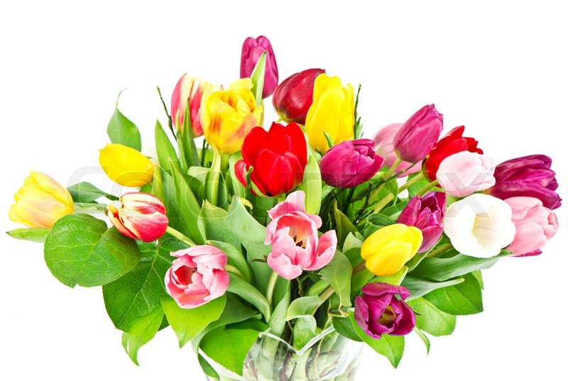 Bouquet Of Colorful Fresh Tulip Flowers Stock Photo