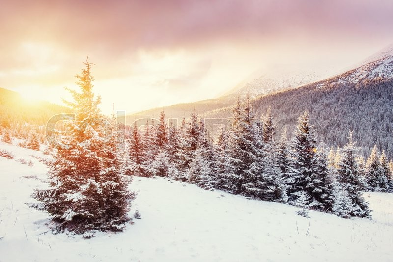Mysterious Winter Landscape With Fog Majestic Mountains In The Winter Magic Winter Snow