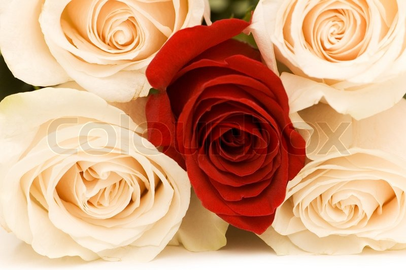 Close Up Of Four White And One Red Roses Stock Photo