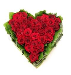 Bildergebnis für rote rosen jpg
