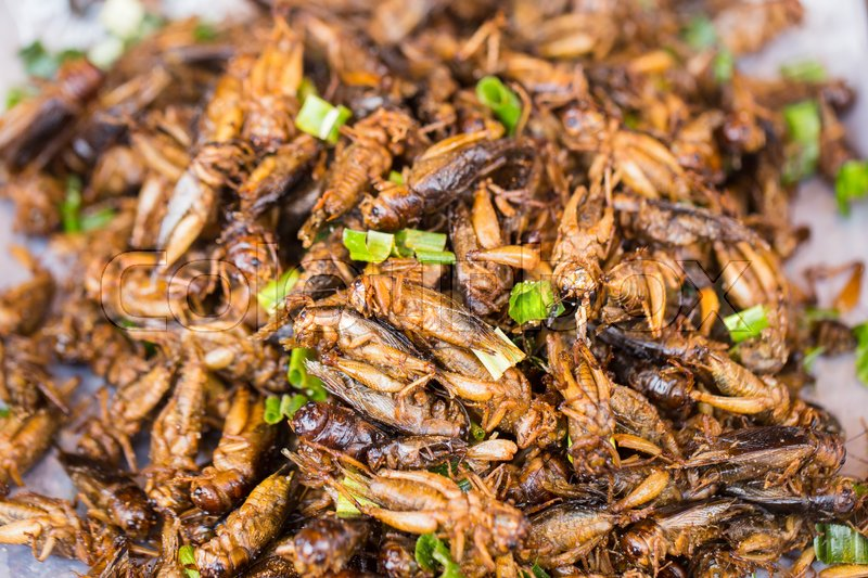 Crickets - Edible bugs in Thailand | Ummi Goes Where?