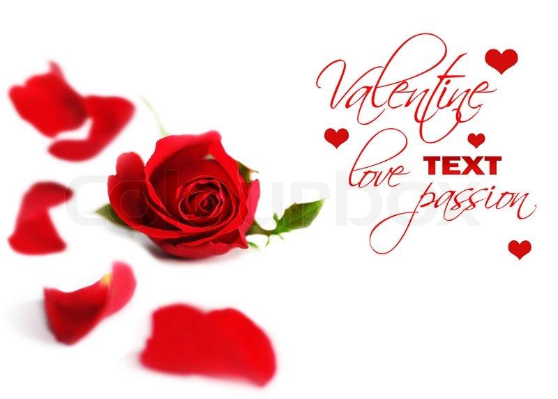 Happy Valentine Red Rose Border Fresh Flower With Petals