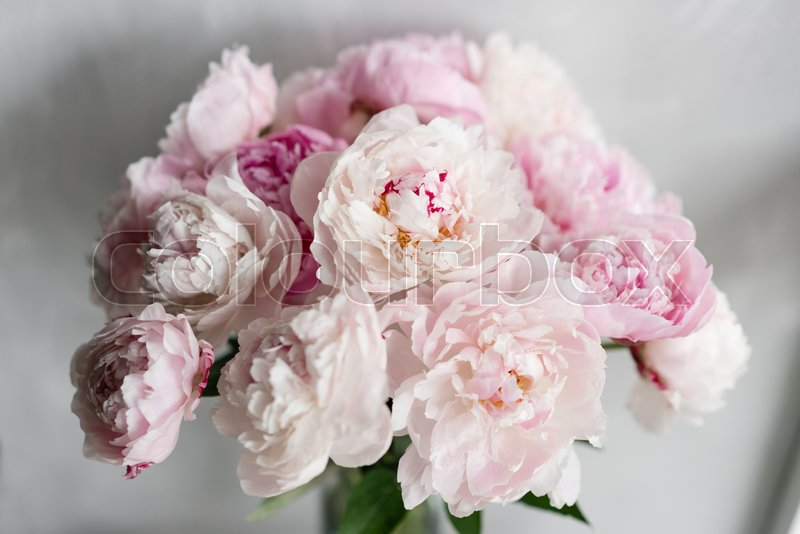 Cute and lovely peony  many layered petals  Bunch pale pink peonies     Cute and lovely peony  many layered petals  Bunch pale pink peonies flowers  light gray background  Wallpaper    Stock Photo   Colourbox
