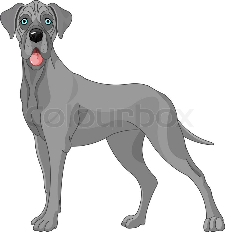 Great Dane Dog Standing In Front Of White Background