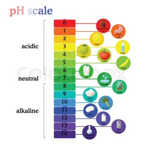 PH scale diagram with corresponding  | Stock Vector