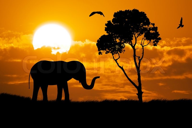 Silhouette Of Elephant Stock Photo Colourbox