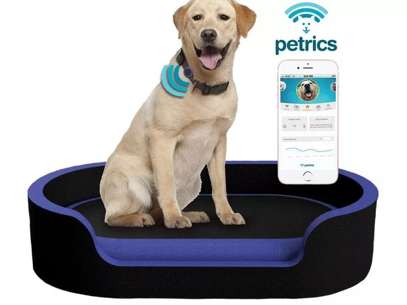 Dog on Petrics Smart Pet Bed
