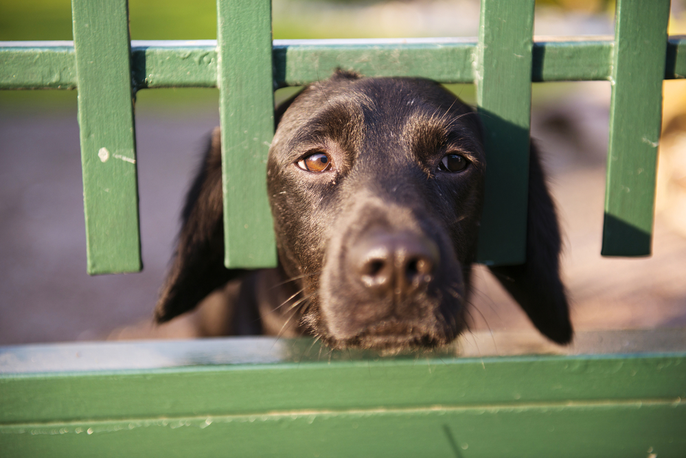 Ideas For Dogs That Get Out Of A Fence