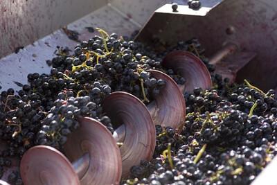 Associate Degree in Wine Production