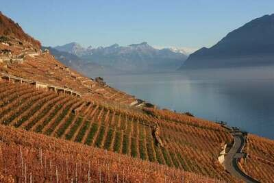 Certificate in Wine Regions