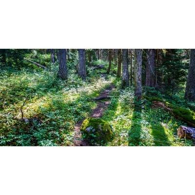 Enchanted Forest -- Larey McDaniel