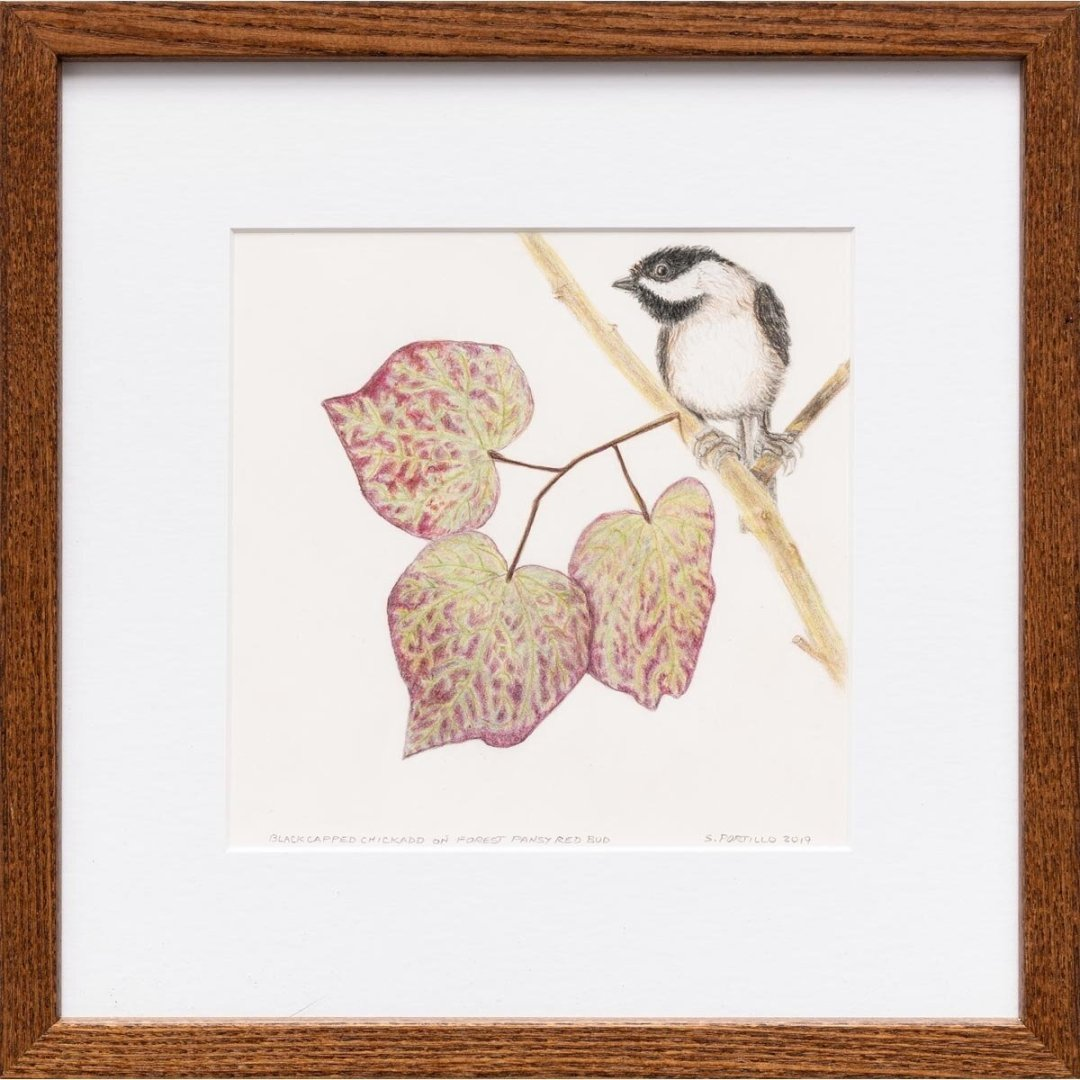 Black Capped Chickadee on Forest Pansy Redbududd -- Sylvia Portillo