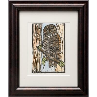 Spotted Owl in Spring -- Sylvia Portillo
