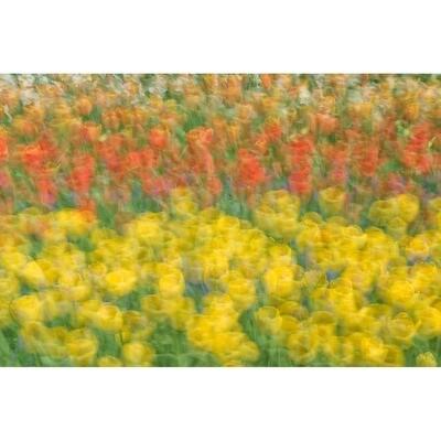 Tulip Abstract -- Rob Tilley