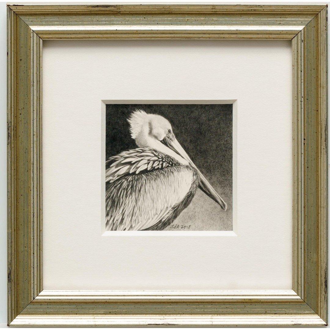 Adair, Sue deLearie -- Pelican Portrait