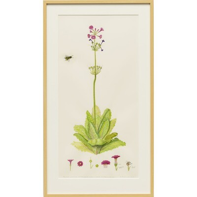 Japanese Primrose and Honey Bee