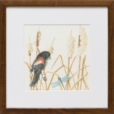 Redwing Blackbird Defending Territory Amongst Cattails -- Sylvia Portillo
