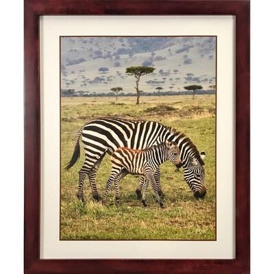 Zebra Dreamscape -- Jeff Lane