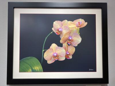 Yellow and Purple Orchid -- Jeff Lane