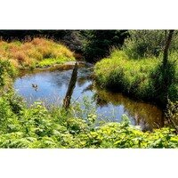 Bear Creek Bend -- Larey & Phyllis McDaniel