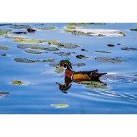 Cool Swim -- Phyllis McDaniel
