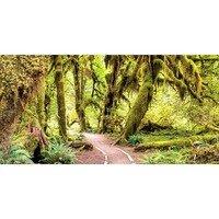 Hall of Mosses -- Larey McDaniel