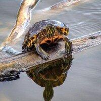 Who U Lookin At -- Phyllis McDaniel