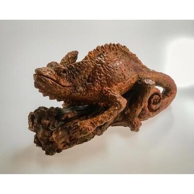 Chameleon -- Rachel Muller