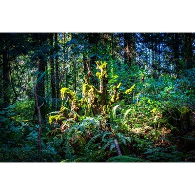 A Light in the Forest -- Phyllis McDaniel