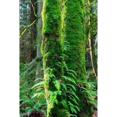 Rainforest Rhapsody -- Phyllis McDaniel