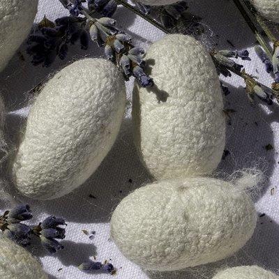 Soie - Cocons entiers - par 12