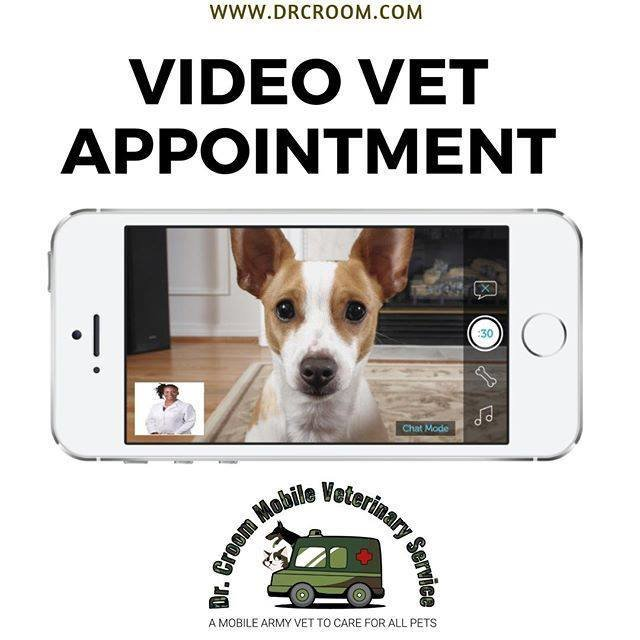 Video Veterinary Appointment for 3 Pets