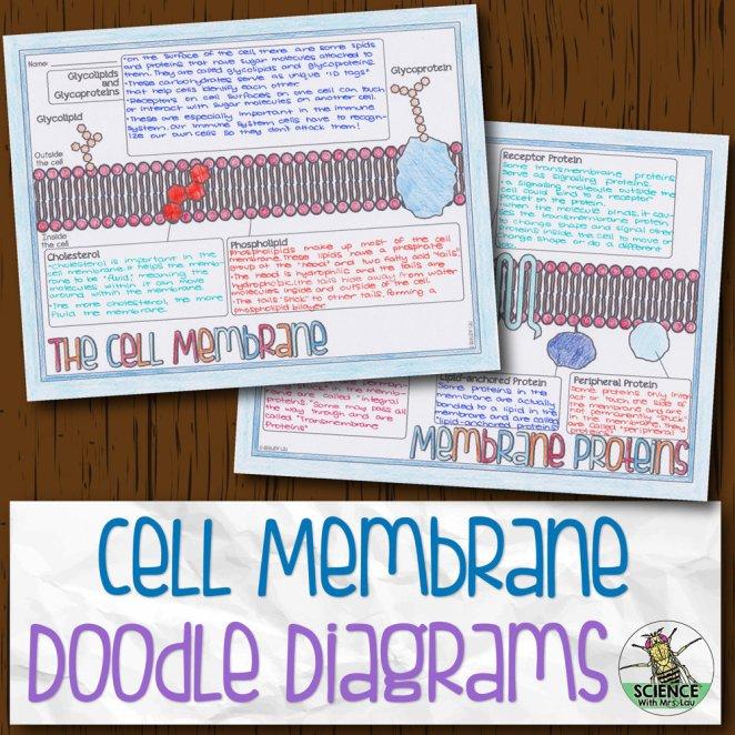 Cell Membrane Doodle Diagrams