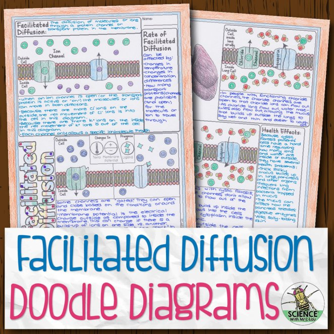 Facilitated Diffusion Doodle Diagrams