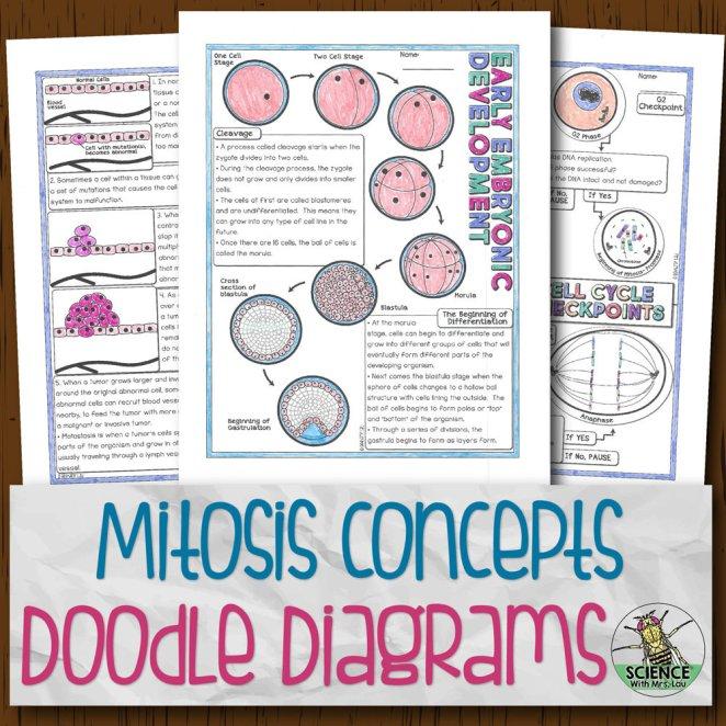 Mitosis Concepts Doodle Diagrams