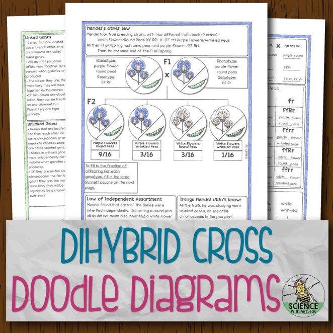 Dihybrid Crosses Doodle Diagrams