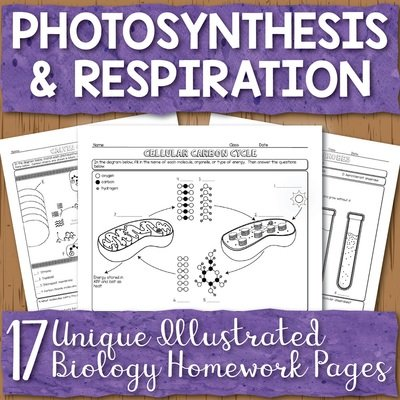 Photosynthesis and Respiration Homework Pages