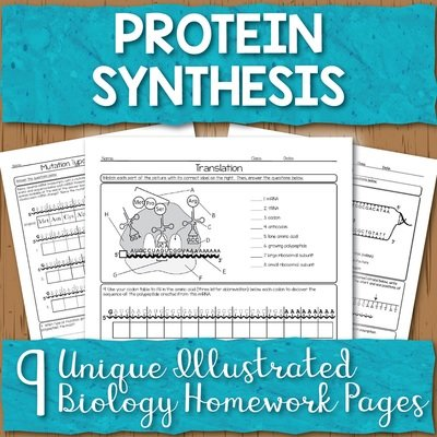 Protein Synthesis Homework Pages