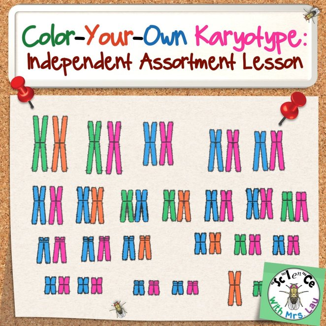 Color Your Own Karyotype Activity