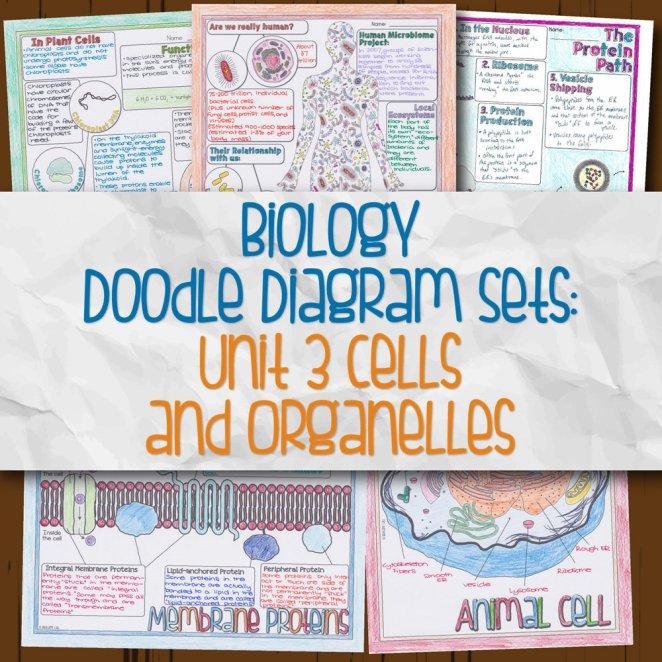 Biology Unit 3 Doodle Diagram Sets