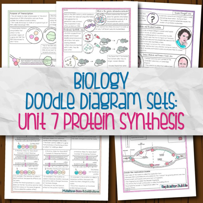 Biology Unit 7 Doodle Diagram Notes Protein Synthesis