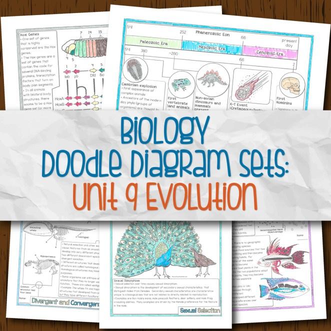 Biology Unit 9 Doodle Diagram Sets for Evolution