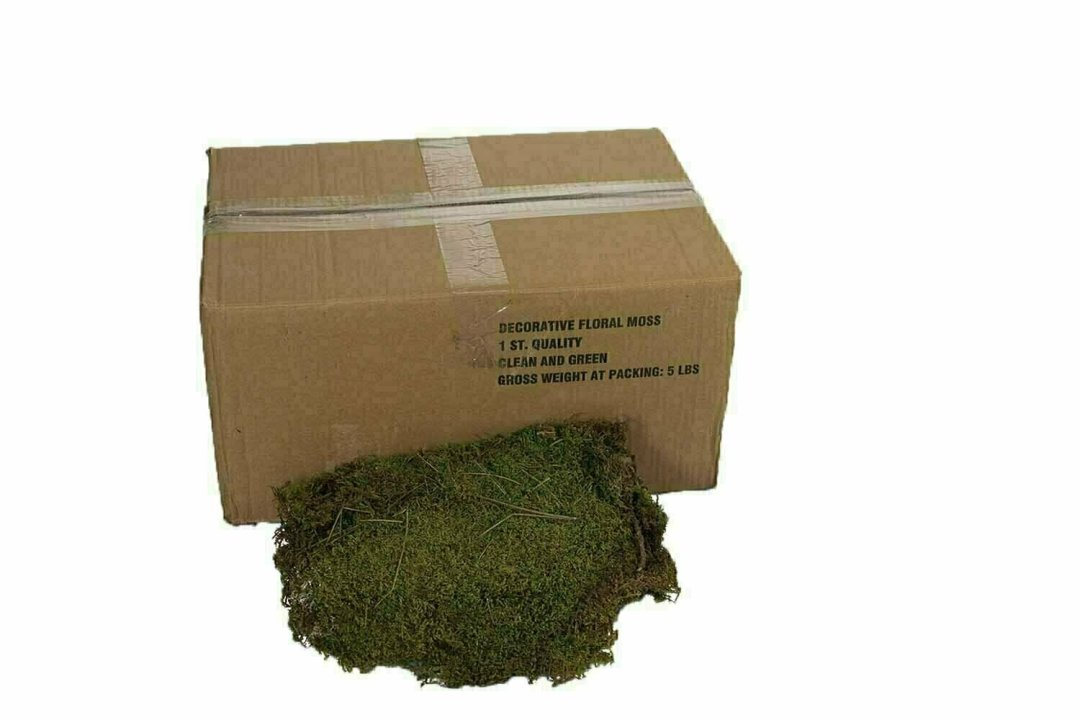 9500 - 5 lb Bulk Perserved Fresh Green Sheet Moss