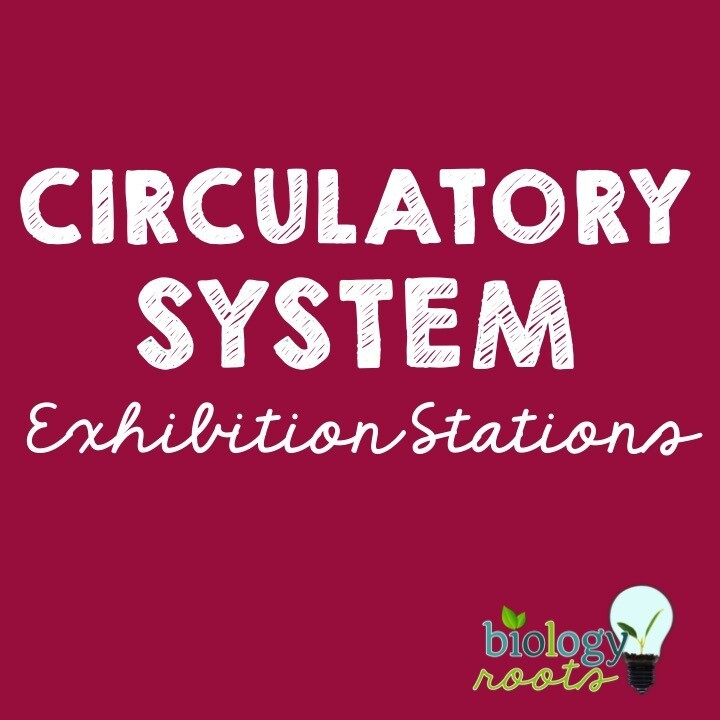 Circulatory System Exhibition Stations Bundle