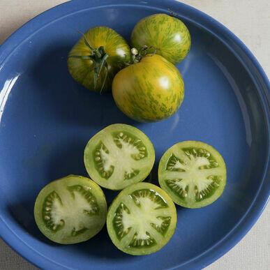 Green Zebra Tomato Plant 4