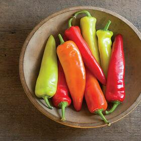 Hot Wax Pepper Plant 4